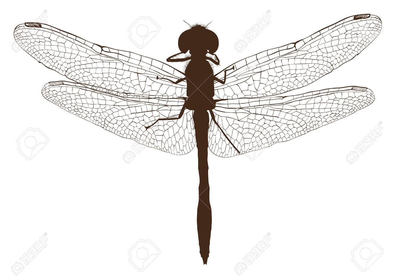 brown dragonfly silhouette top view isolated on white illustration