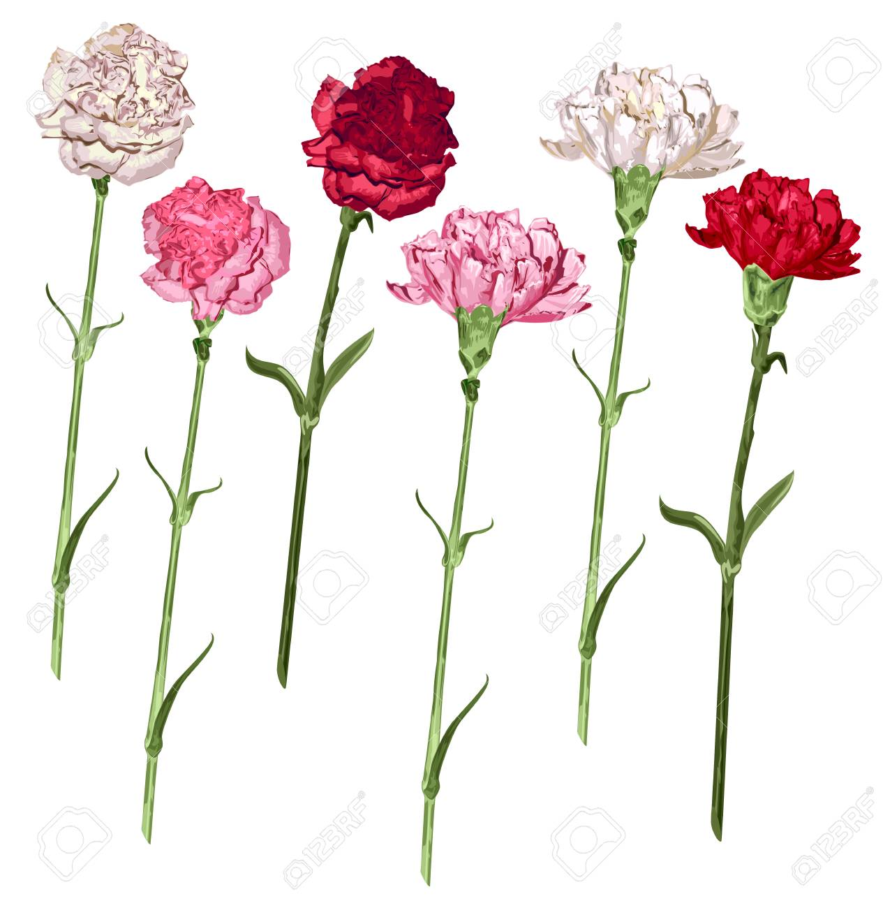Set carnation flowers white pink and red carnation isolated set carnation flowers white pink and red carnation isolated on white vector illustration mightylinksfo
