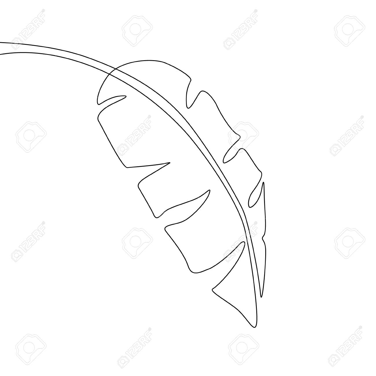 One Line Drawing Banana Leaf Continuous Line Exotic Tropical Royalty Free Cliparts Vectors And Stock Illustration Image 122484163