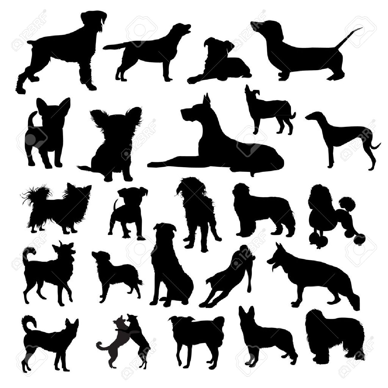 greyhound stock photos royalty free greyhound images and pictures