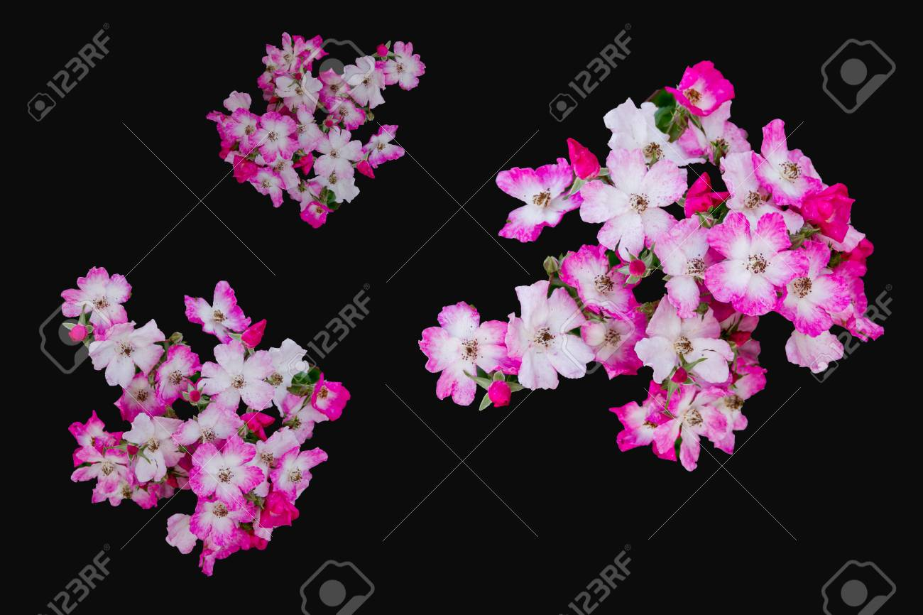 Little Red And White Flowers On Black Background Stock Photo