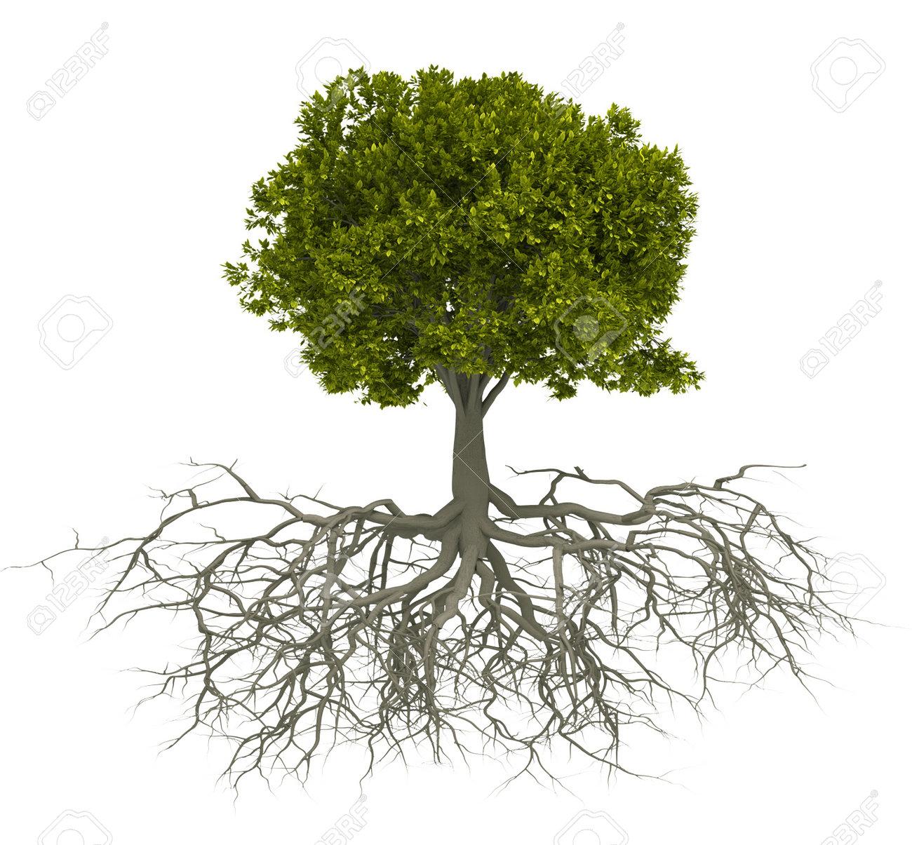 Arbre Avec Racine arbre avec racine isolé sur blanc - ceci est une illustration rendu