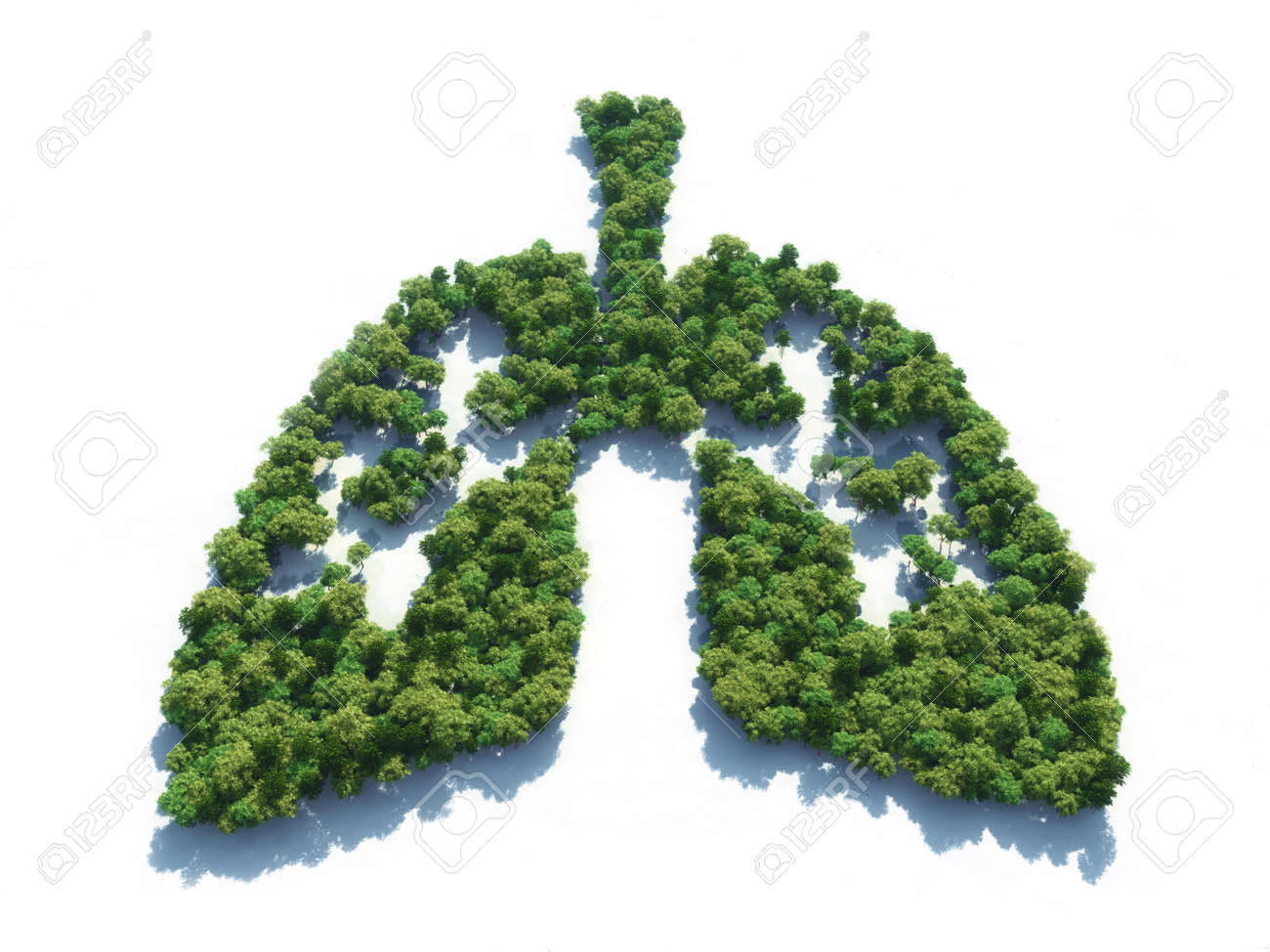 Conceptual image of a forest in shape of lungs - 3d illustration - 104879226