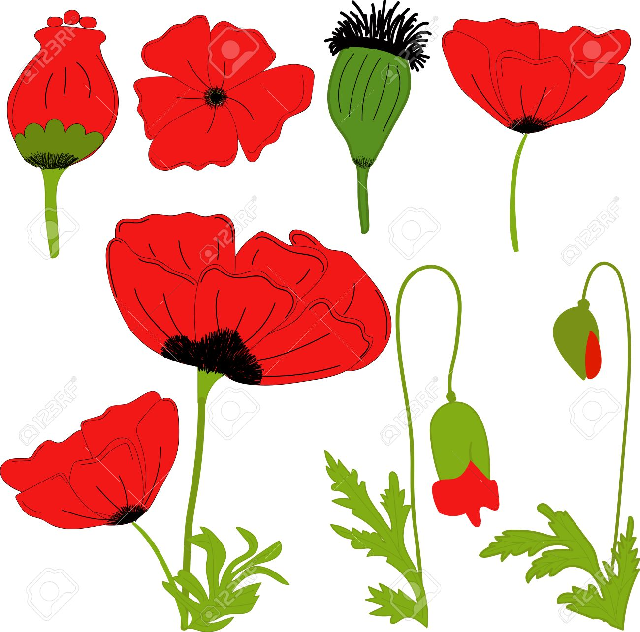 Separate Elements Flowers Red Poppy Flowers Leaves Bolls