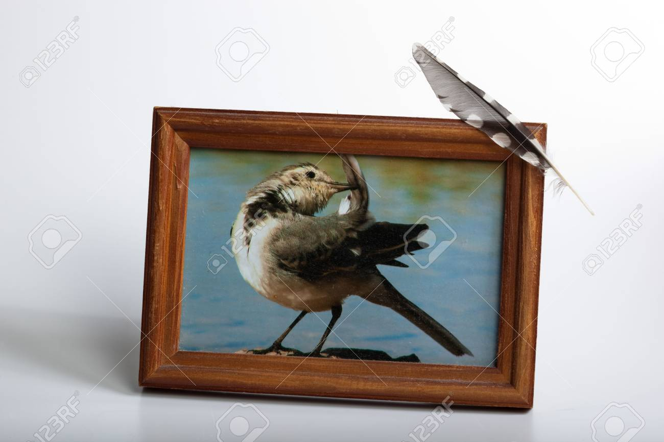 Photo of the White Wagtail in the frame (Motacilla alba). Stock Photo - 6109826