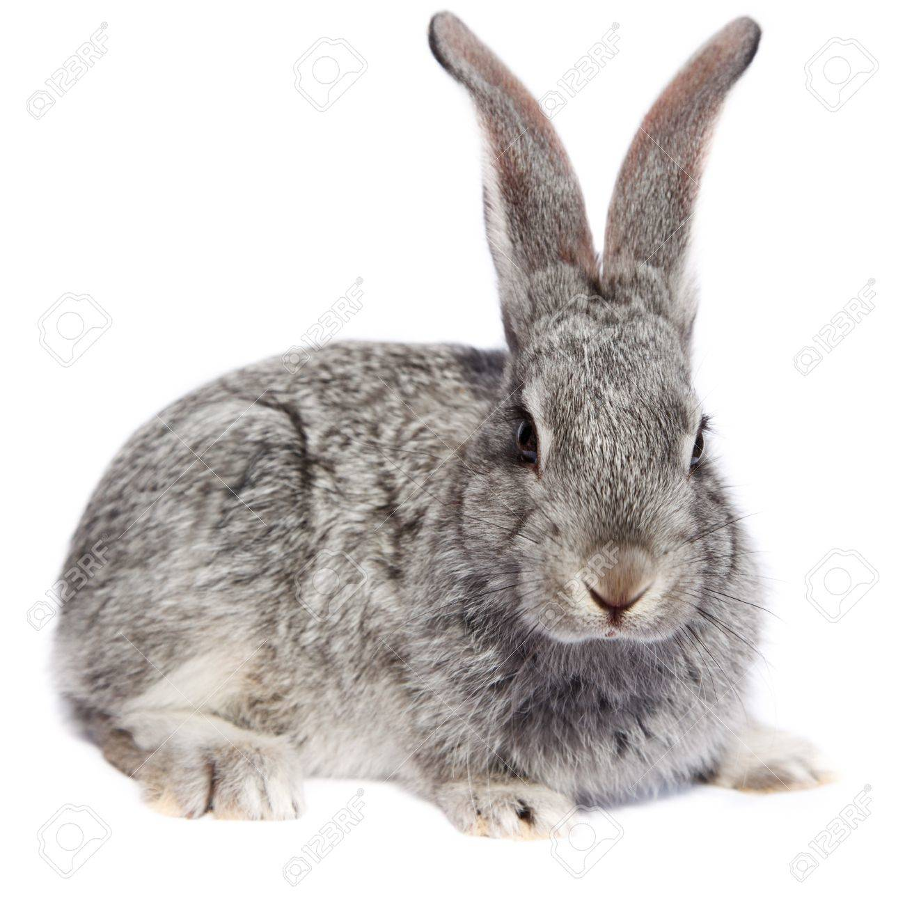 Rabbit in studio against a white background. Stock Photo - 7411059