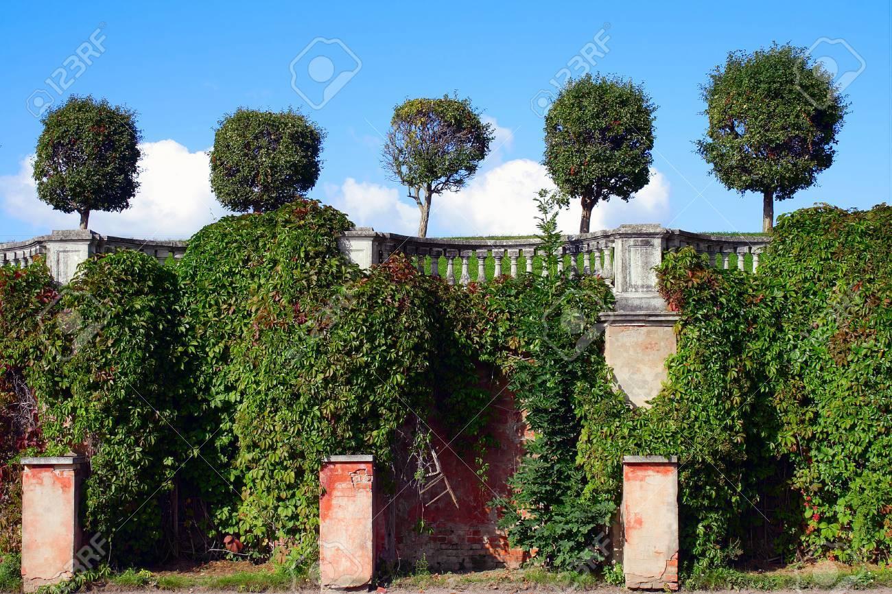 Peterhof Arbustos Decorativos De Uva Tiene Un Muro De Protección Del Jardín De Venus