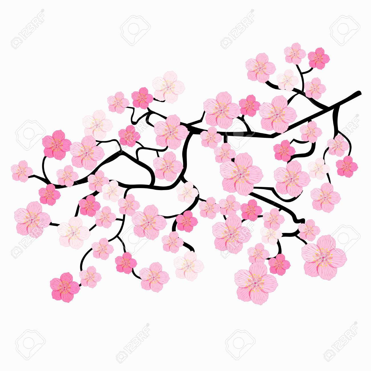 branches of japanese cherry blossoms vector illustration royalty rh 123rf com cherry blossom vector download cherry blossom vector ai