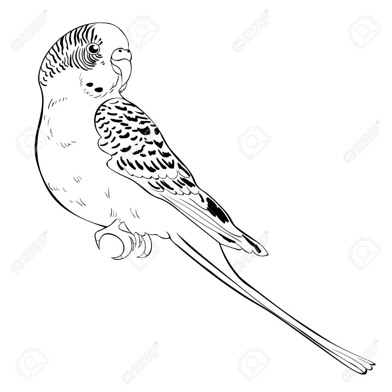 Ungewöhnlich Flying Papagei Malvorlagen Ideen - Druckbare ...