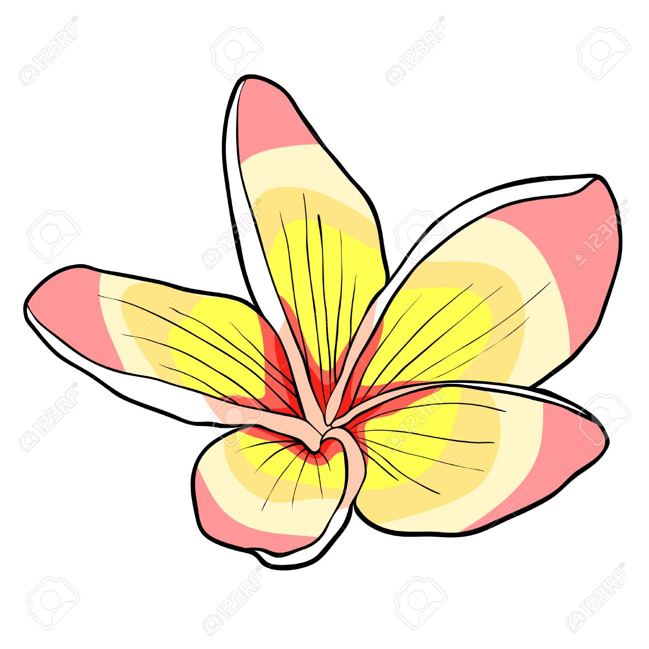 Hawaiian Plumeria Flower An Exotic Vector Illustration Royalty Free