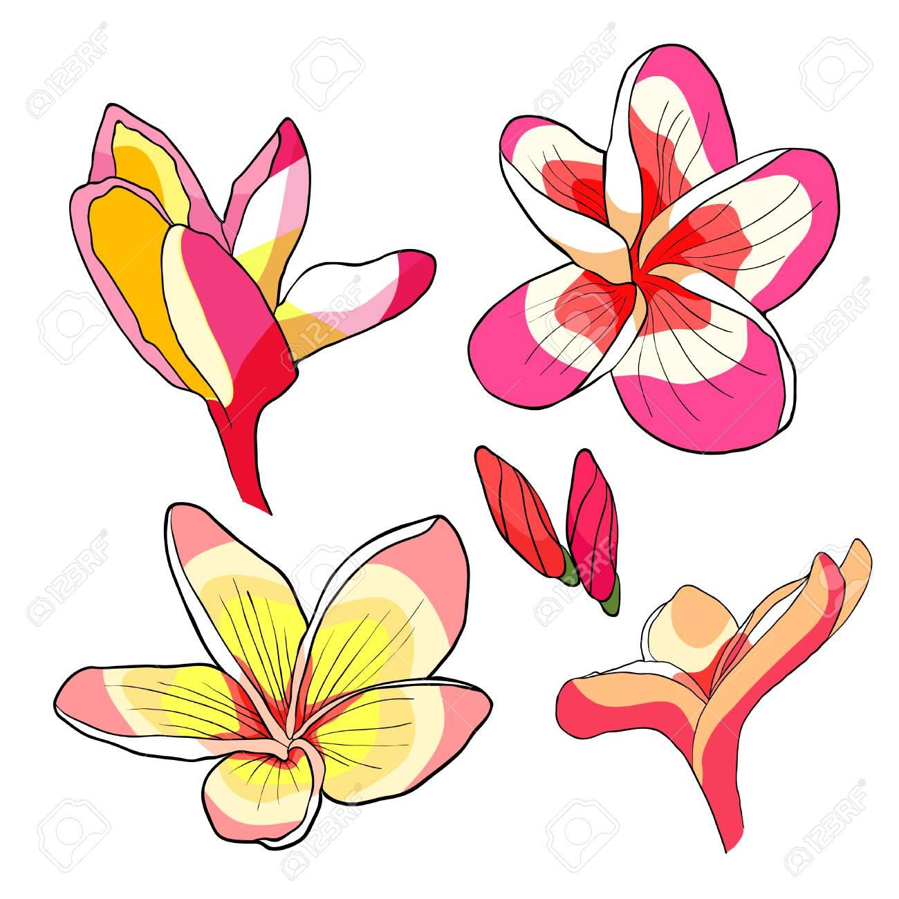 Establecer Flor De Plumeria Hawaiana Una Ilustración Vectorial ...