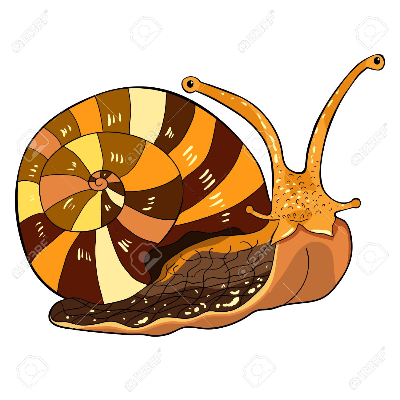 the insect snail gastropod mollusk vector illustration royalty free
