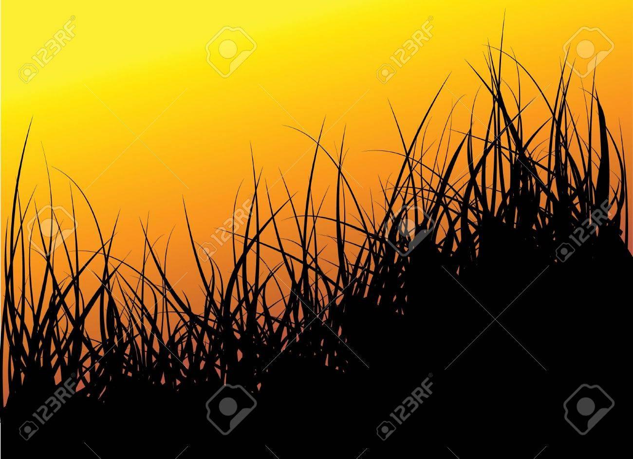 Green grass background - sunset Stock Photo - 5740890