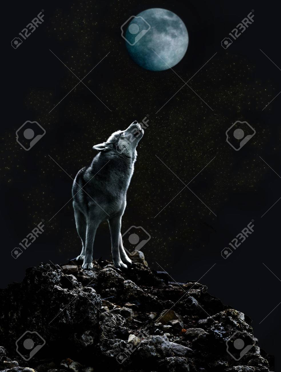 A lone wolf sings his sad song to the moon