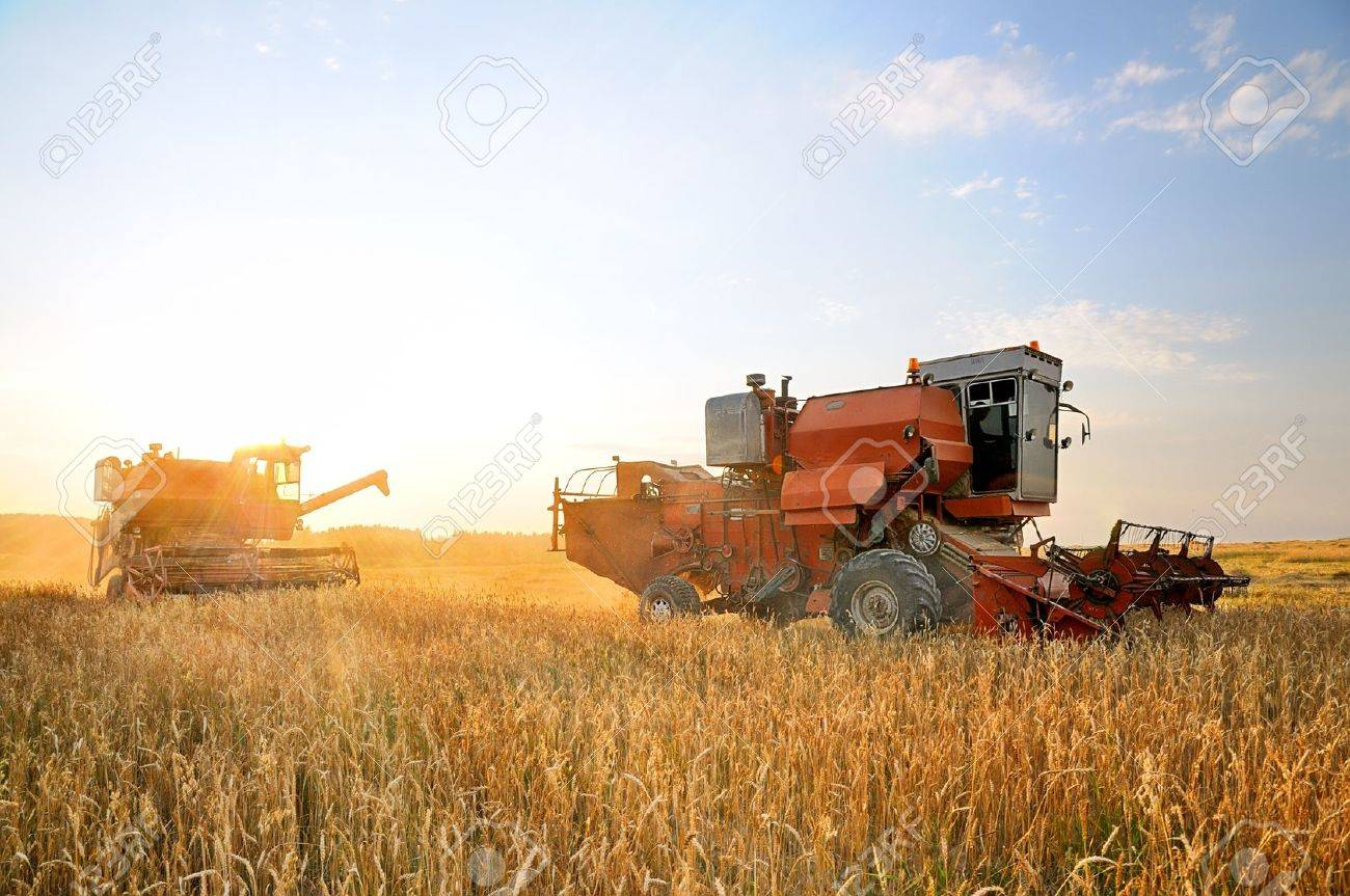 Combine Harvester. Combine harvesting. Agricultural machinery. Harvest. Farming in the field. Stock Photo - 10383061