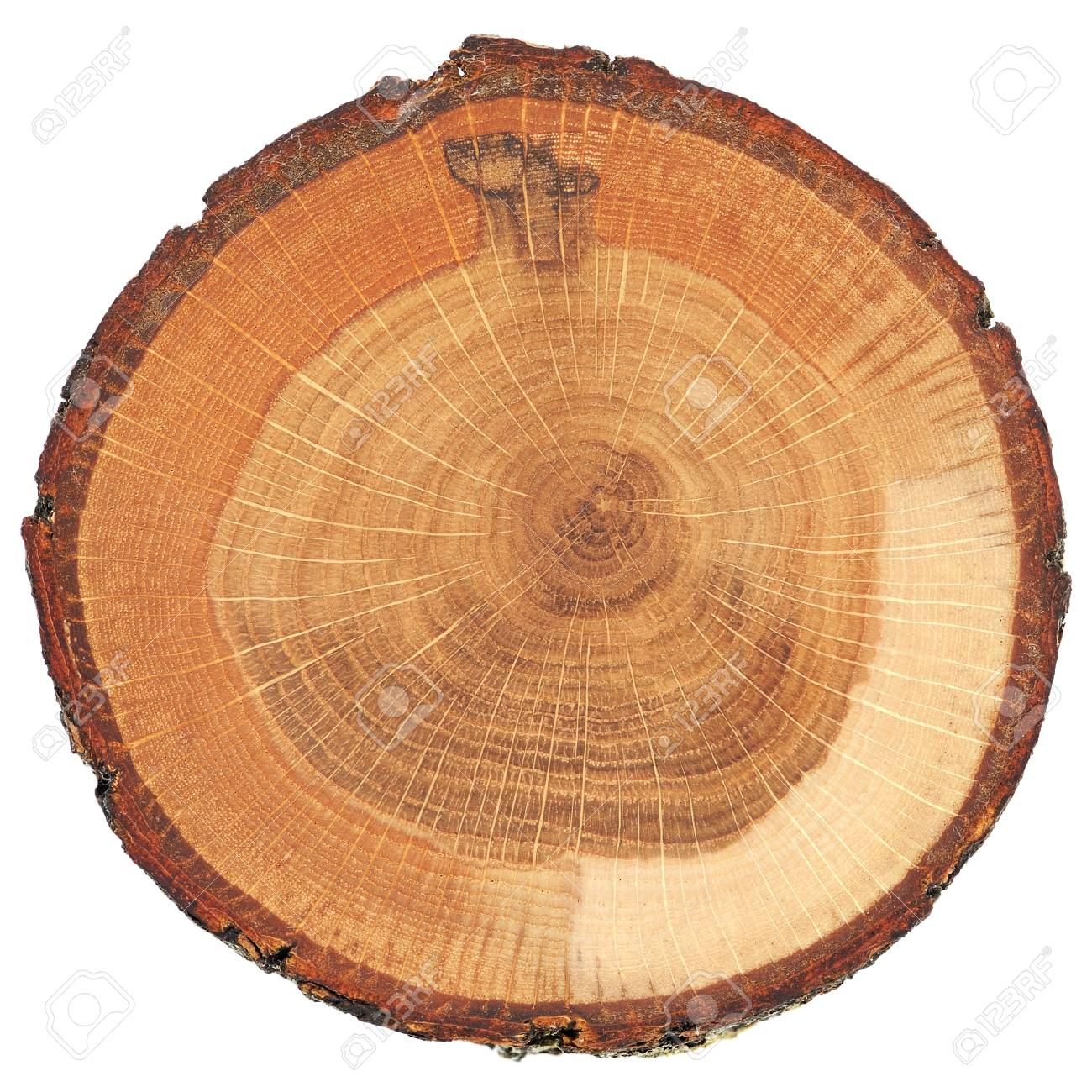 Cracked oak split with bark isolated overhead view - 91543061