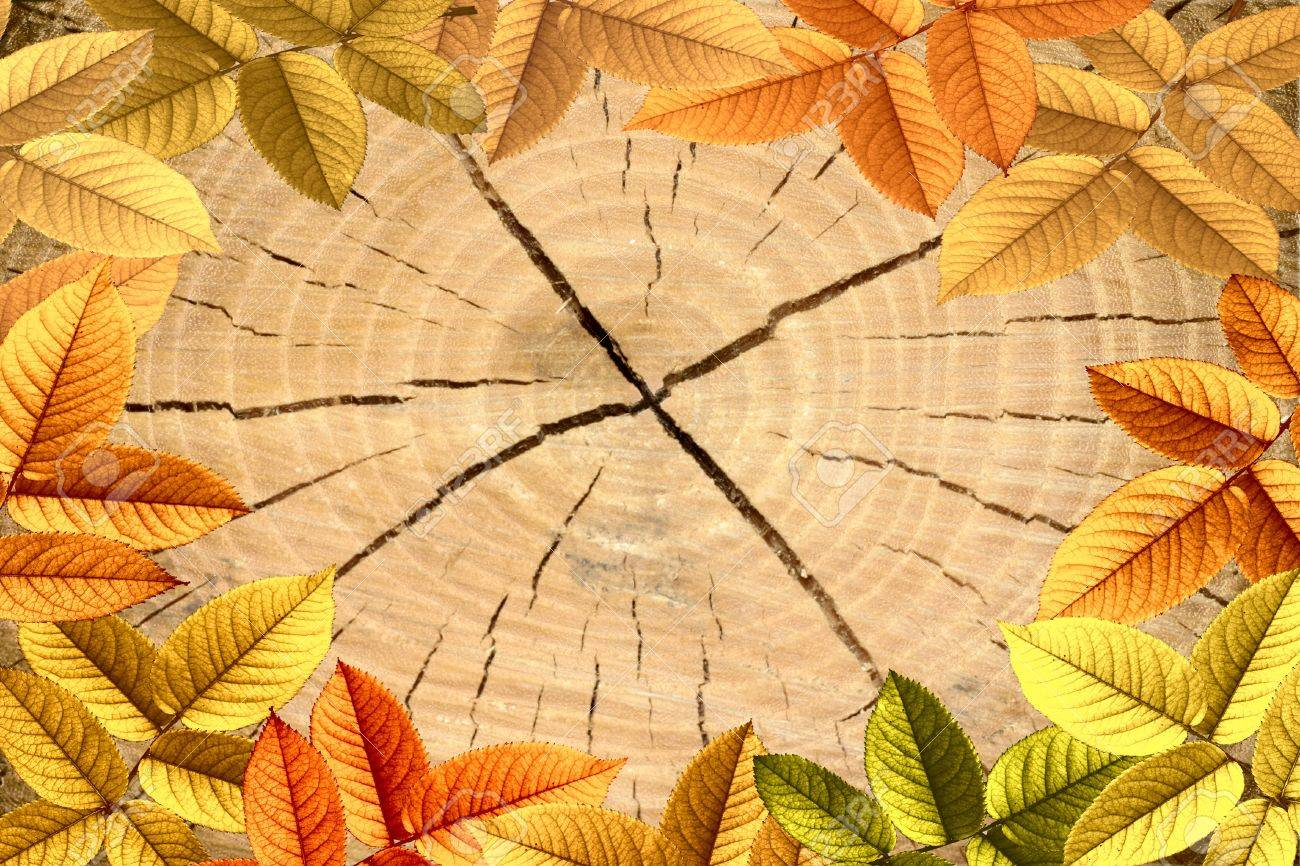 Beautiful texture of tree stump a Oak Tree with autumn leafs Stock Photo - 14717722