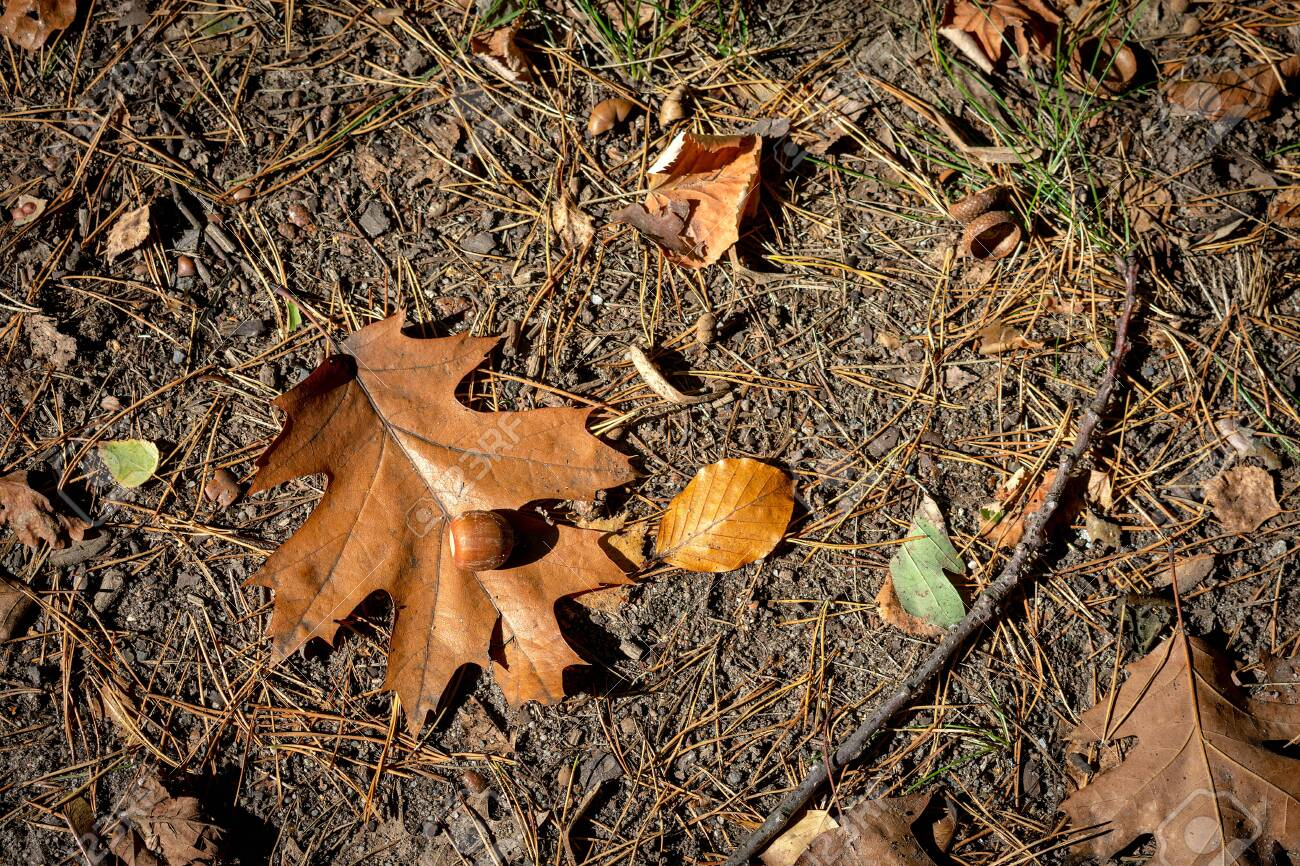 autumn leaves on the grass - 142837705