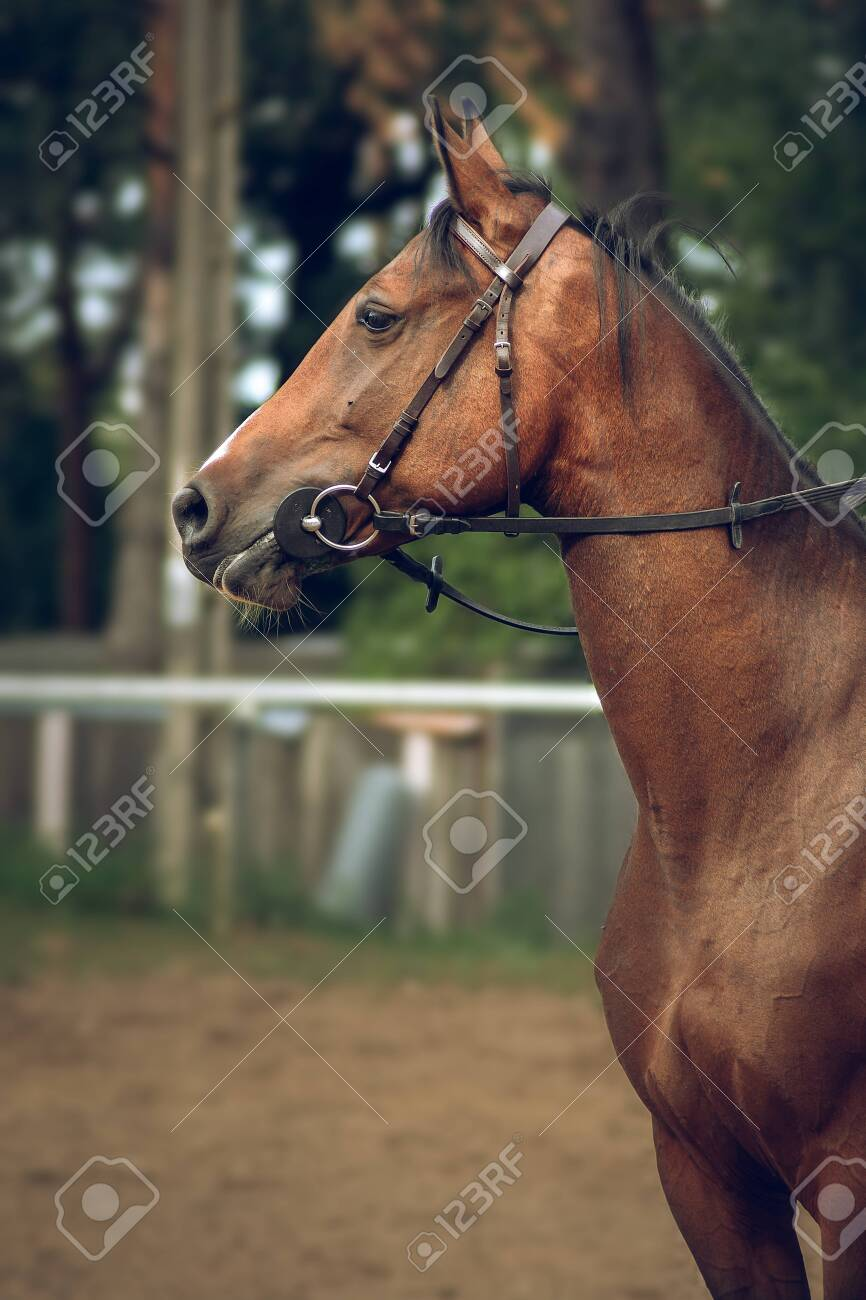 portrait of a horse - 146331970