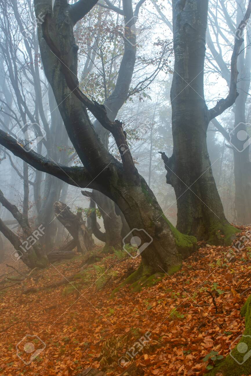tree in the forest - 146515661