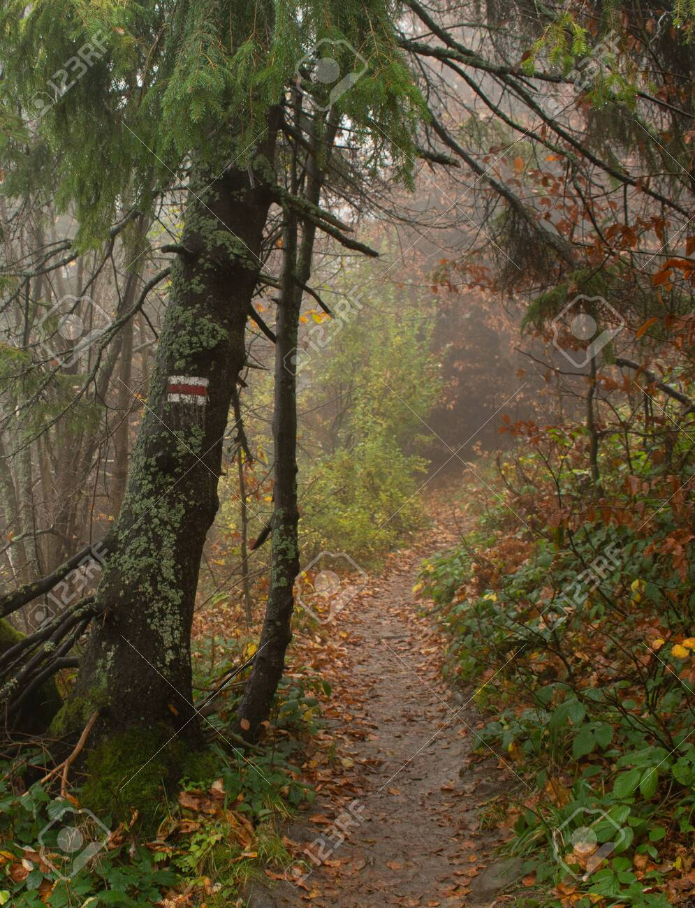 Autumn in a wild hazy forest. Road to nowhere. Bieszczady National Park. Red trail blazing and the mountain. - 146516351
