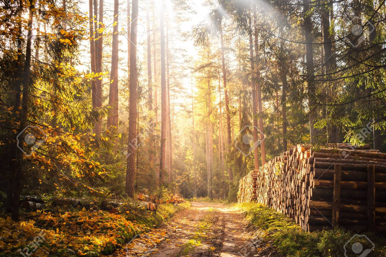 autumn in the forest - 146514898