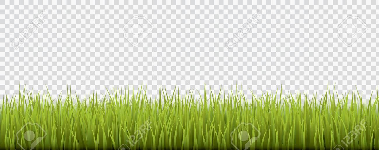 Fresh realistic green grass - vector illustration - 148862110