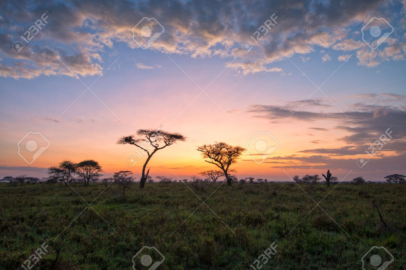 Fantasy African lanscape of the beautiful sunrise in savannah - 35740808