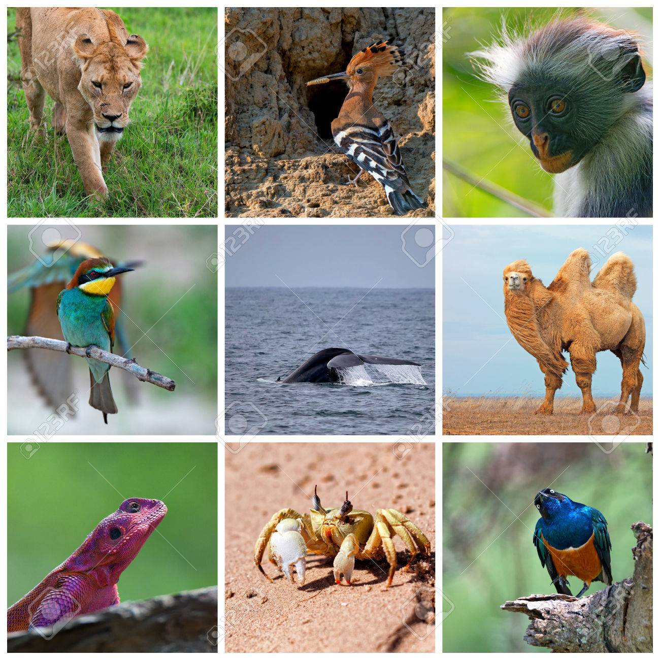 Collage Consisting Ofl Images Of Wild Animals Stock Photo