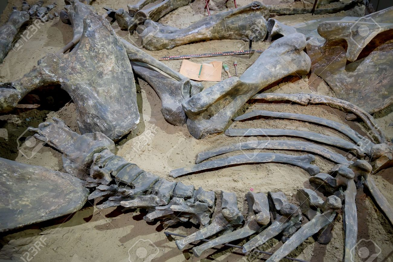 Fosili - Page 8 66578733-paleontological-excavation-site-with-prehistoric-animals-and-dinosaur-fossils