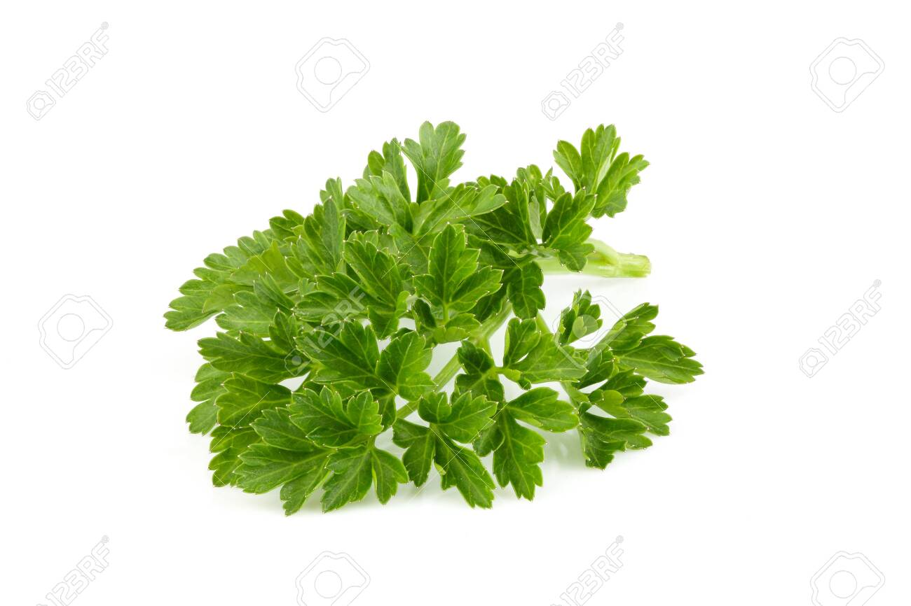 Fresh branch of parsley close up on white background. - 134330387