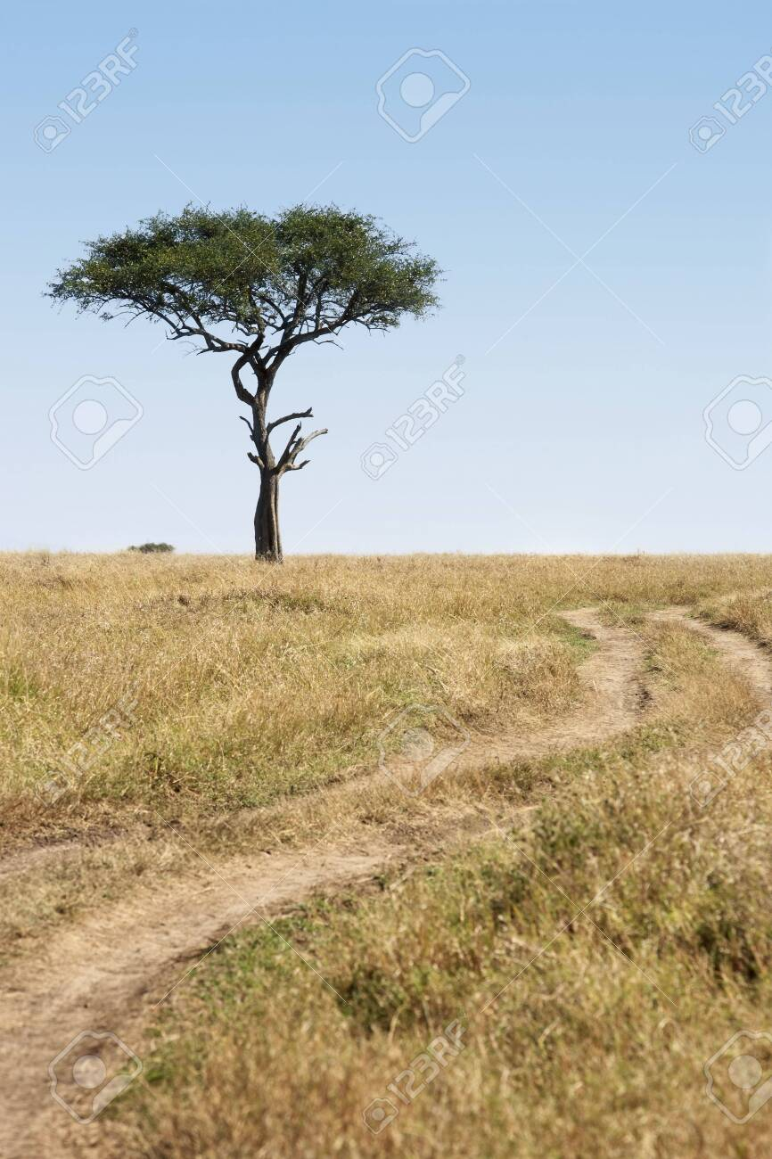 in the beautiful plains of the masai reserve in kenya africa - 121744493