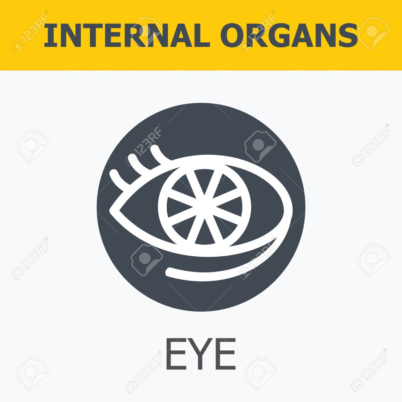 Internal organs eye family and a healthy lifestyle medical internal organs eye family and a healthy lifestyle medical infographic icons human ccuart Gallery