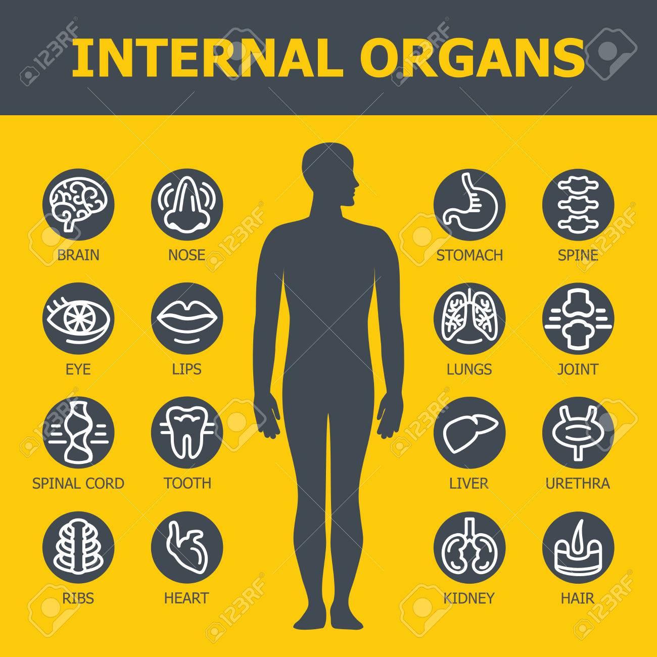 Innere Organe Festgelegt. Medizinische Infografik Icons, Menschliche ...