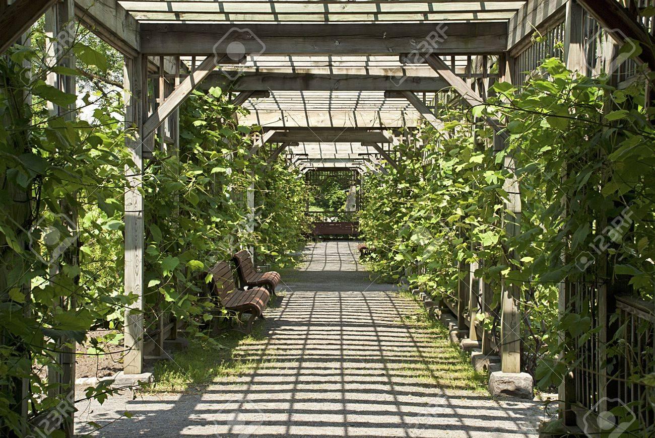 Ensoleillée pergola de vignes dans le Jardin Botanique de Montréal, Québec,  Canada
