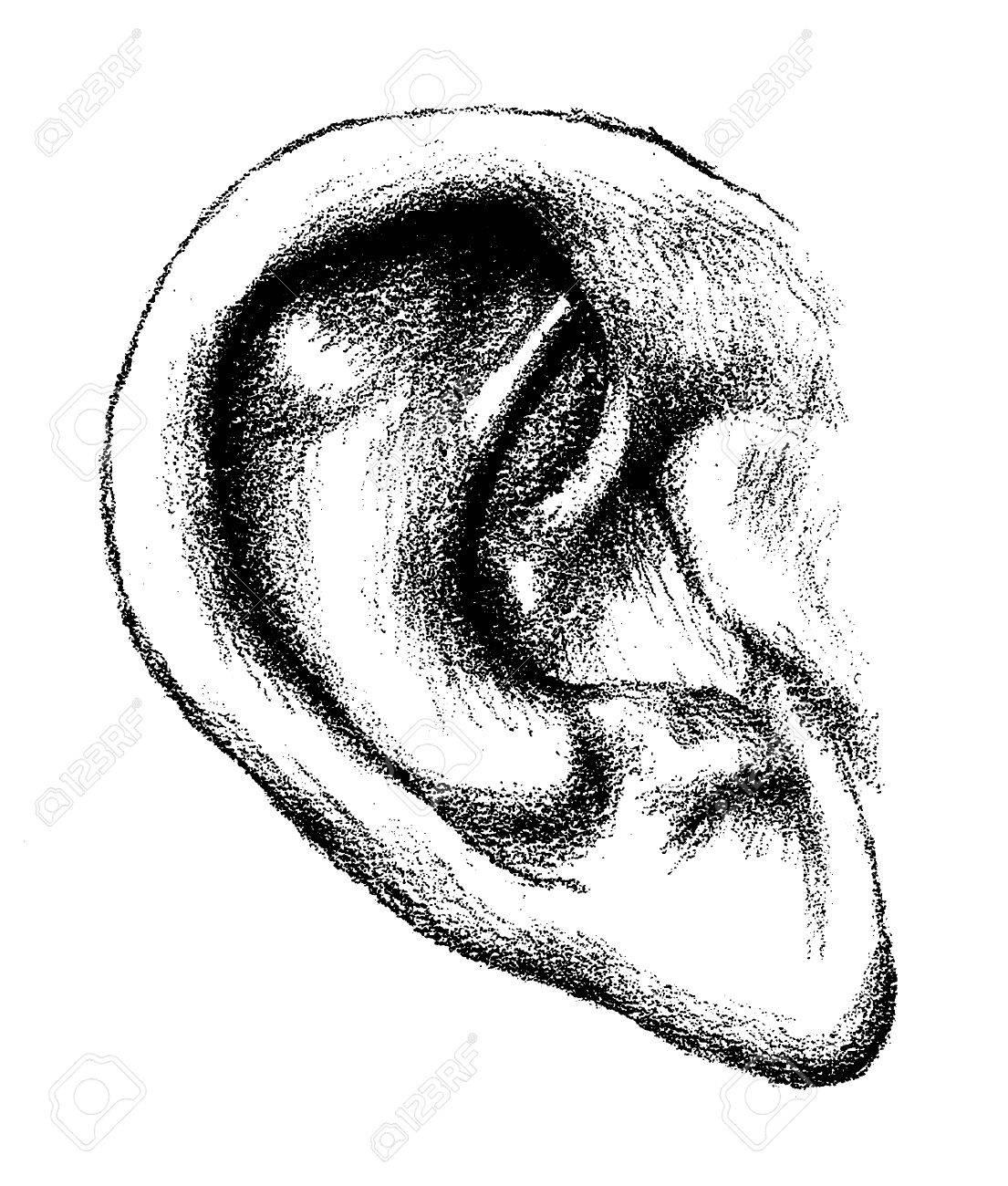 Pencil drawing of an ear art illustration