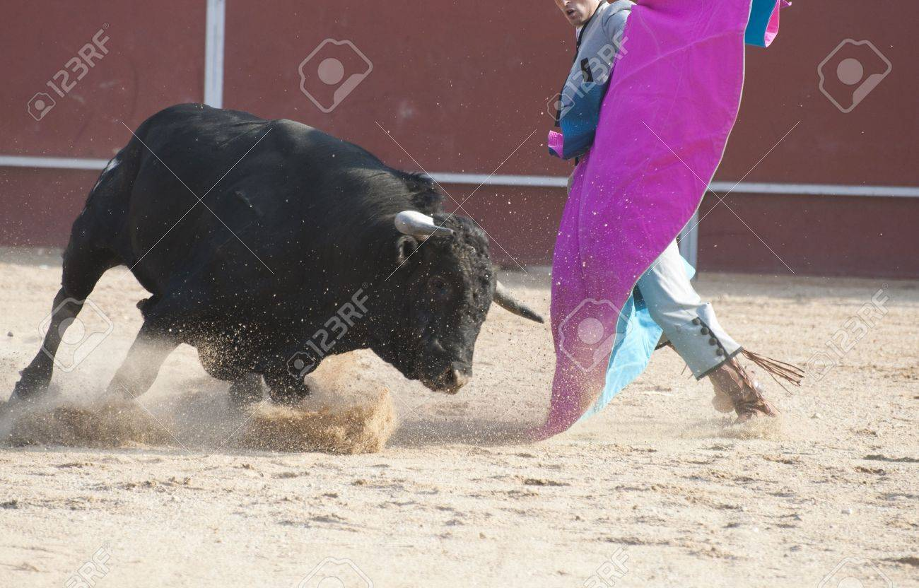 Fighting bull picture from Spain. Black bull Stock Photo - 5620142