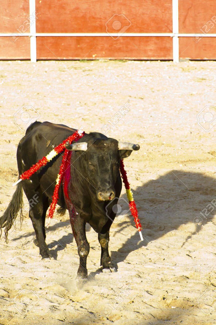 Spanish bull. Bullfight. Animal of great strength and nobility Stock Photo - 7815398