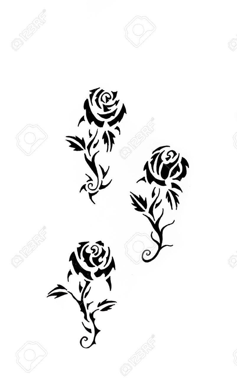 Tattoo Art Sketch Of A Black Rose Tribal Stock Photo Picture And