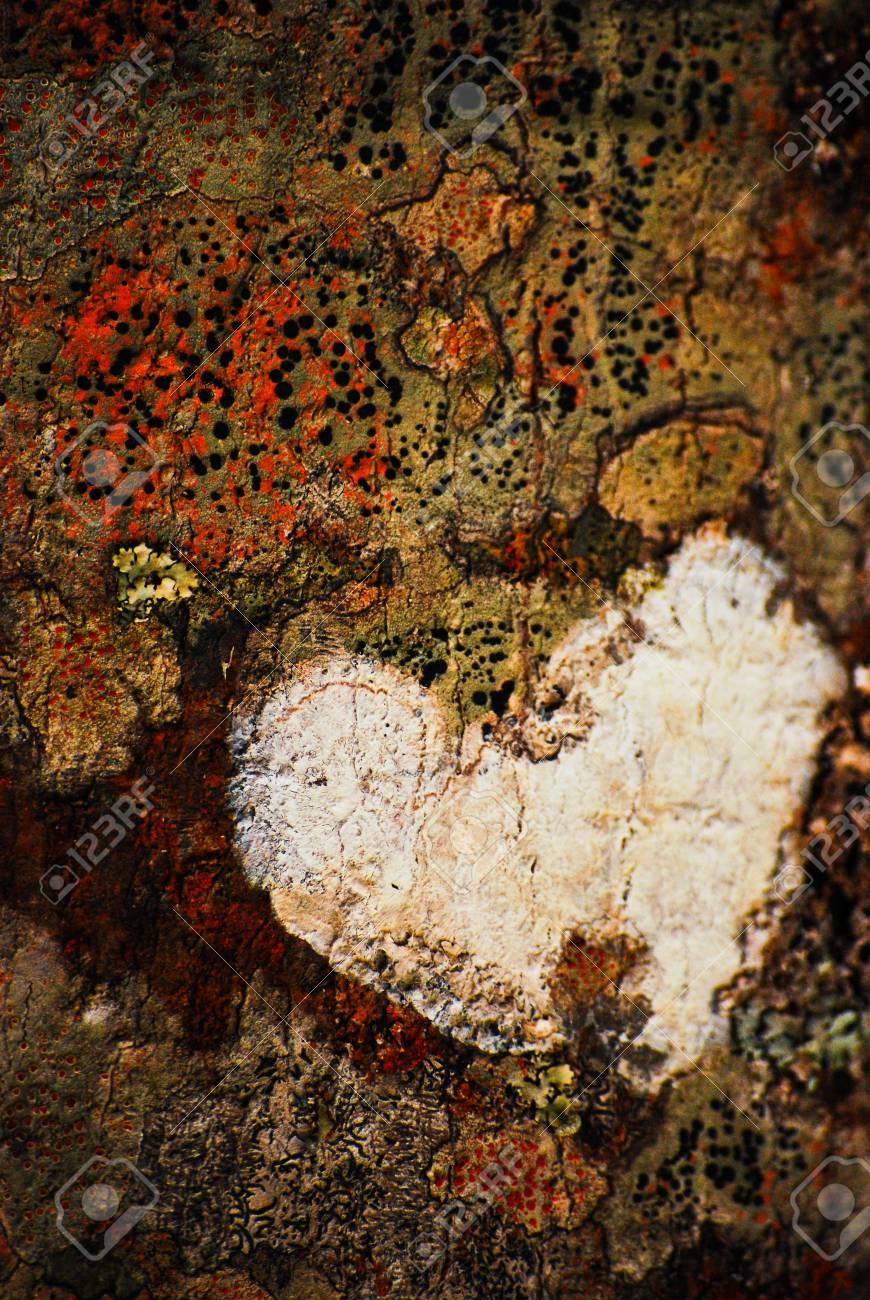 Love is All Around (Heart-shape tree skin) Stock Photo - 6730846