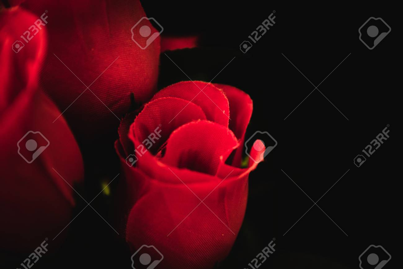 lovely roses stock photo, picture and royalty free image. image
