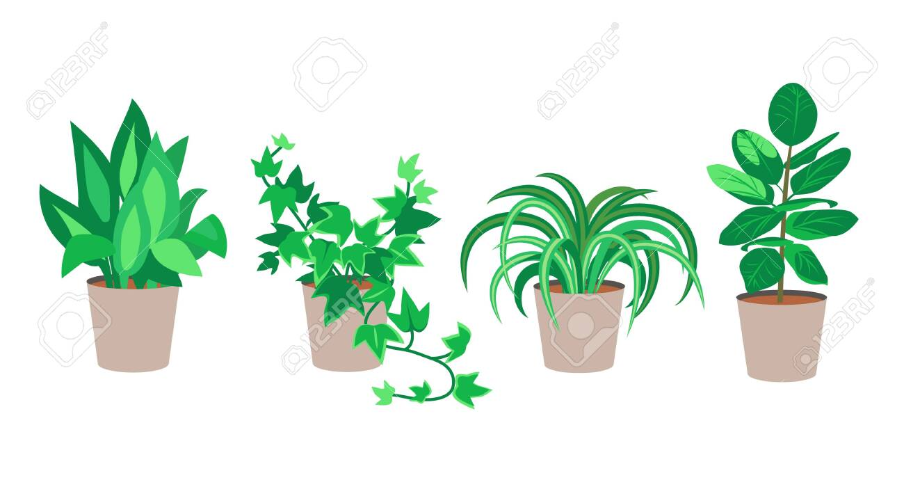 Vector Flat House Plants Illustration Set Of Plants In Pots Royalty Free Cliparts Vectors And Stock Illustration Image 123790654