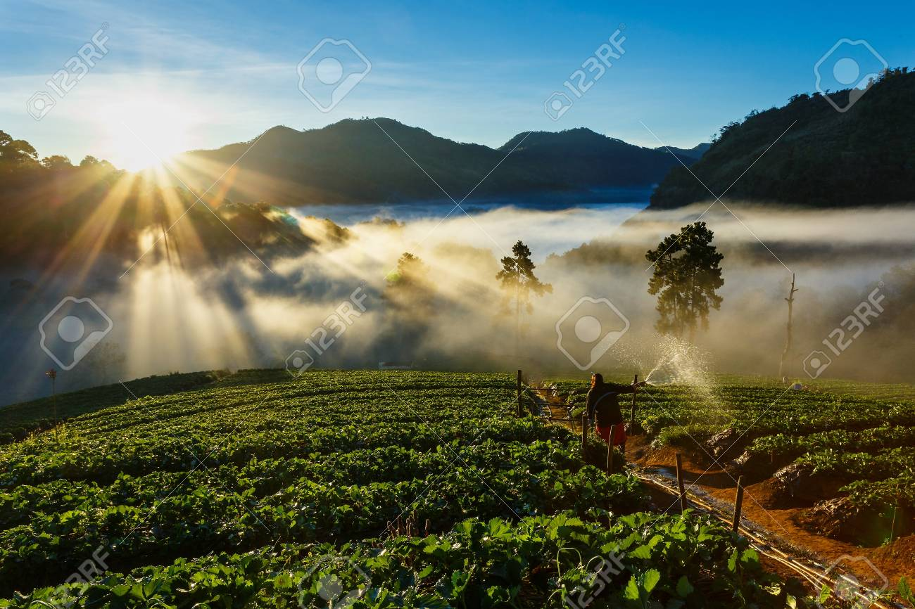 Landscape,nature,Morning light,View of morning mist at strawberry field of Doi Ang Khang,Chiangmai Province,Thailand. - 77092056