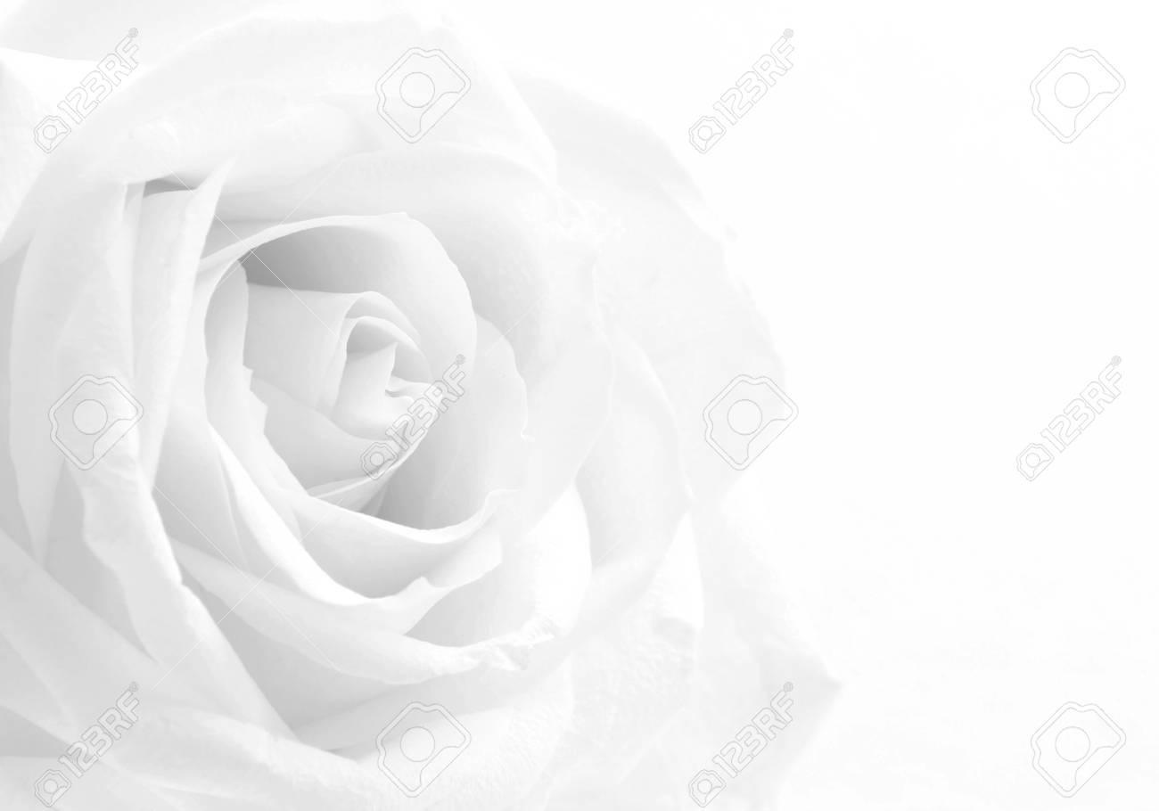 Sfondi rosa bianco e nero