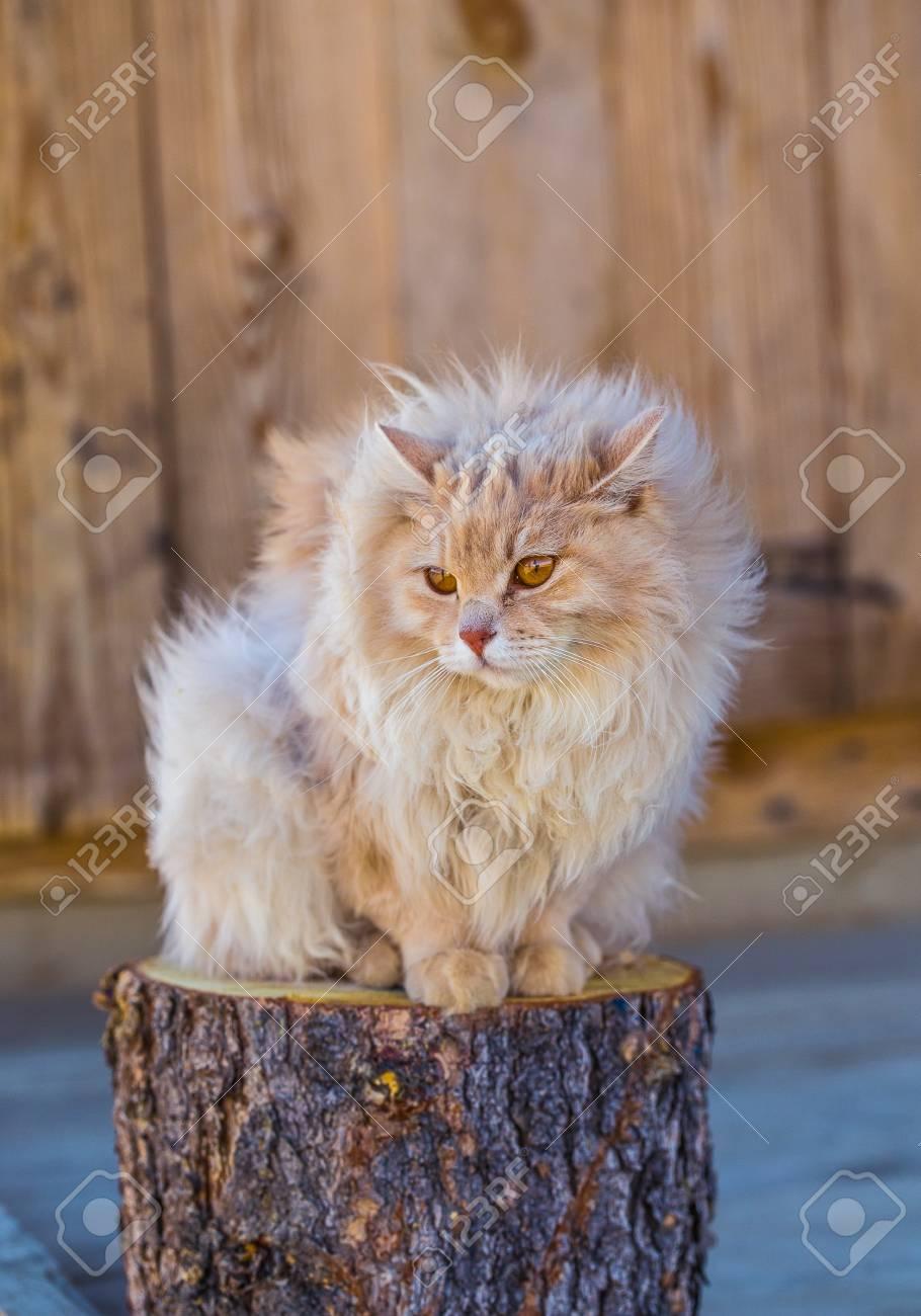 CAT:STUB
