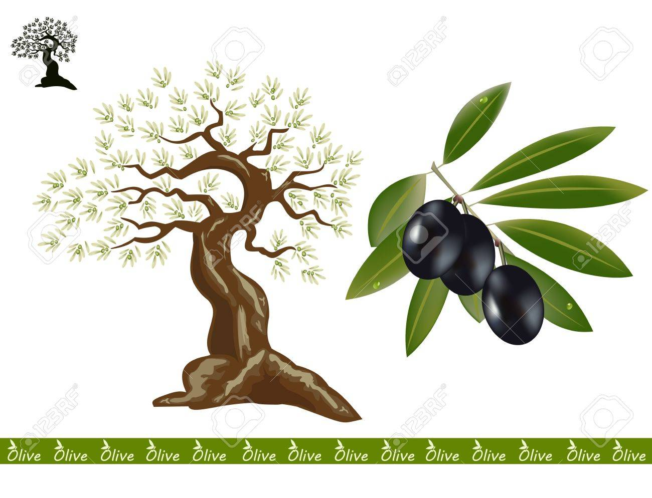 Olive trees for oliv products. A black olive branch on the side. Stock Vector - 13517475
