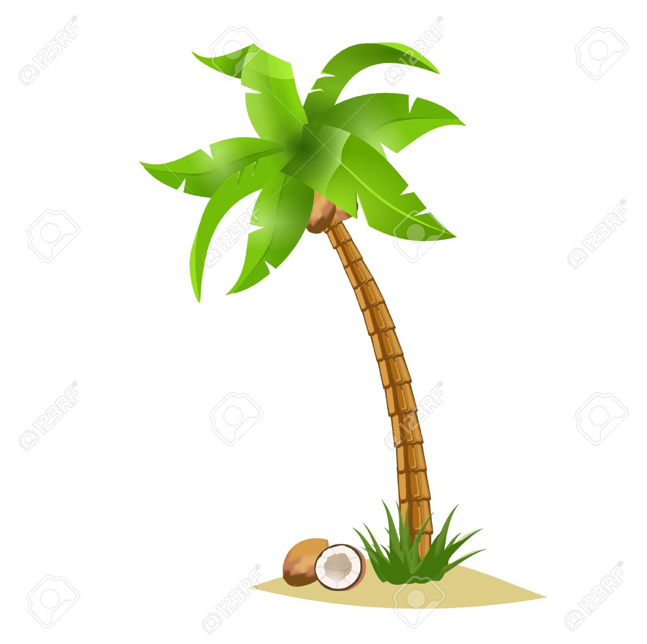 A  bent palm tree width coconuts isolate on white. Summer team. Stock Vector - 14236739
