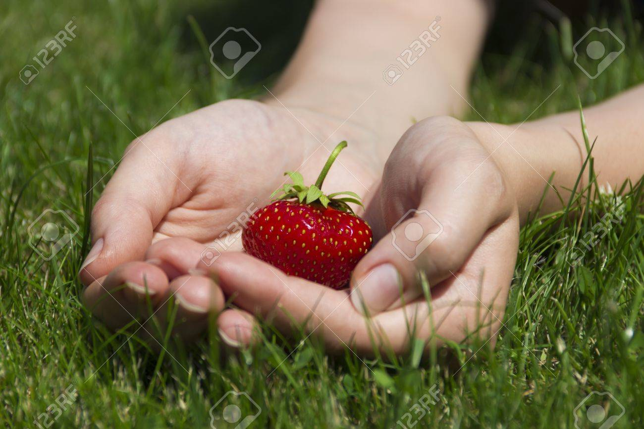 Juicy ripe strawberries in a gentle female hands Stock Photo - 15091460