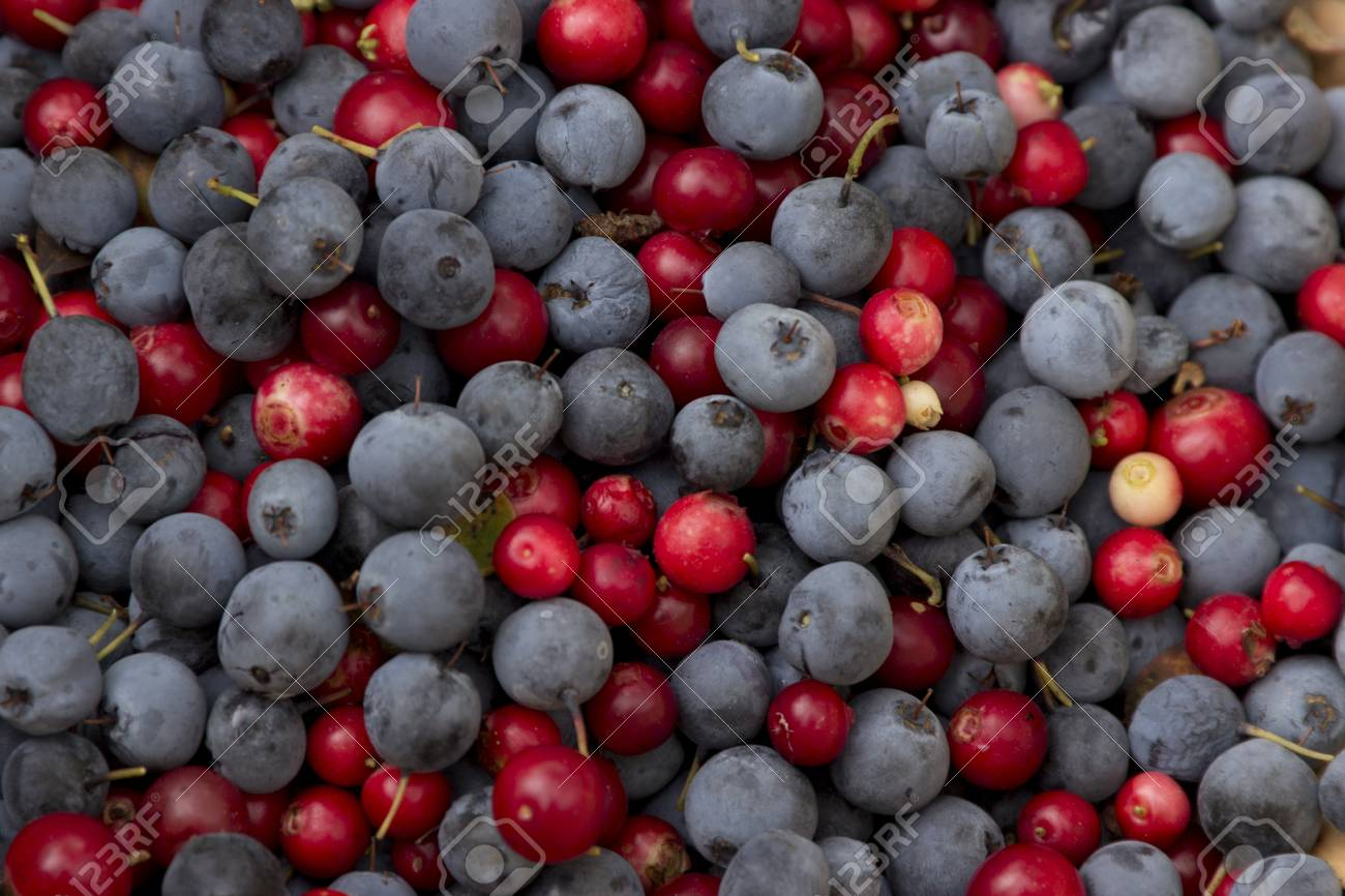 The blue and red berries are loose Stock Photo - 15393547