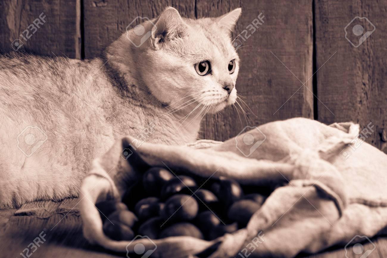 PIC de graisse noir chatte jouir avoir des rapports sexuels
